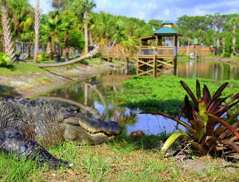 wild Florida1