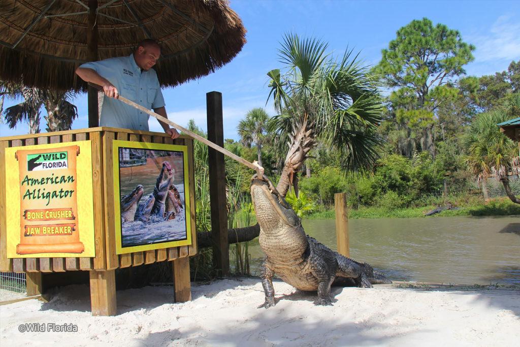 wild Florida3