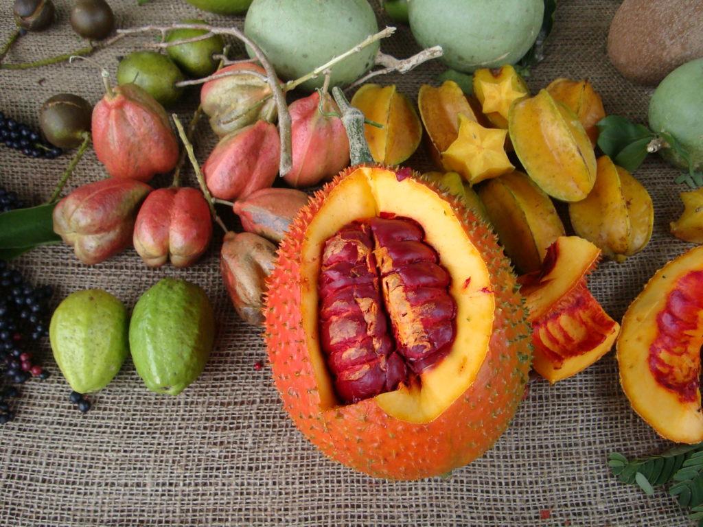 Fruit & Spice Park2